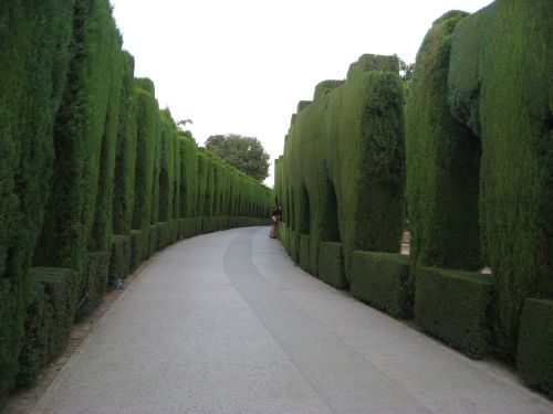 Picture 10g: Alhambra / Green hedges 2