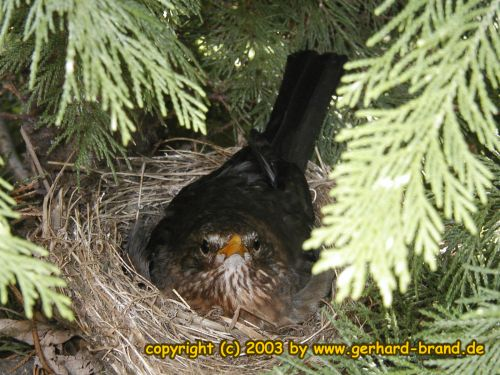 Picture 5: a blackbird, not very amused