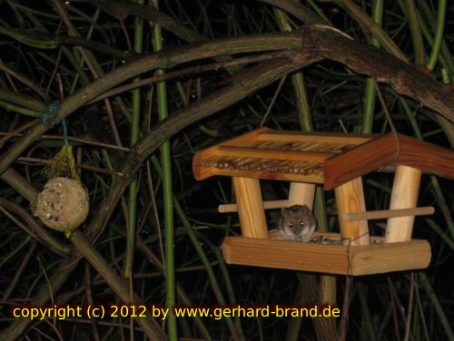 Picture 15: Mouse in the birdhouse